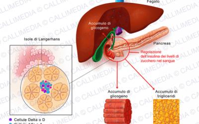 Che cosa è l'insulina e quali sono le sue funzioni?