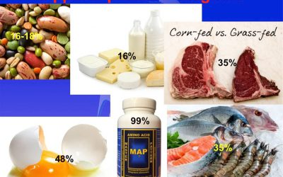 PROTEINE: c'è proteina e proteina