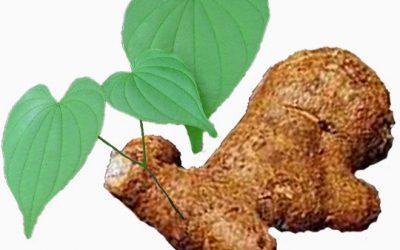 C'è differenza se gli ormoni naturali derivano dalla soia o dalla radice di Yam selvatica?